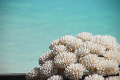 Coral Stock Photos