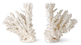 Coral. White corals over white background Stock Photography
