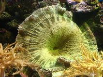 Coral. Reef in Wroclaw zoo royalty free stock images
