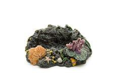 Coral Fotografia de Stock