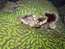 Coral2 illustrazione di stock