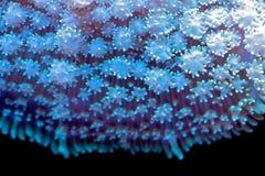 coral Fotografia Stock