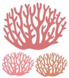 coral Imágenes de archivo libres de regalías