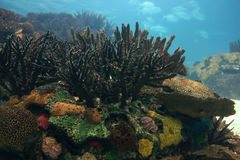 Coral. Underwater world; coral colony and fish Royalty Free Stock Photo