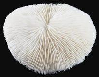 Coral Foto de archivo