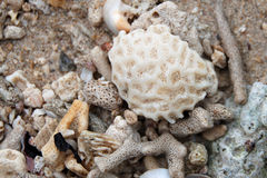 Coral. A variety of coral on the beach in ha long bay, vietnam stock photo
