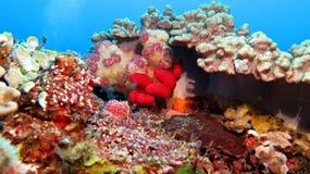 coral Fotografia Stock Libera da Diritti