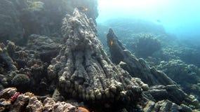 coral Fotografie Stock