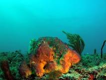 Coral. Taken at 30 feet off the south Florida coast Stock Photo