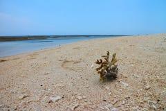 coral Fotografía de archivo libre de regalías