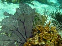 Coral Fotografía de archivo