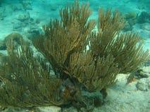 Coral Foto de archivo libre de regalías