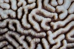 Coral Abstract renforcement de récif photos stock