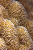 Coral Abstract Underwater Royalty Free Stock Photos