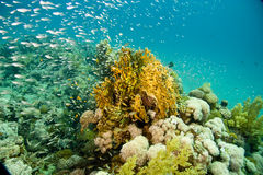 Free Coral And Fish Royalty Free Stock Photos - 5015408