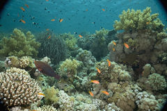 Free Coral And Fish Royalty Free Stock Image - 5347226