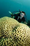 Coral And Scuba Diver Royalty Free Stock Image