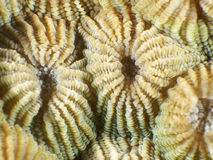 Coral Background Royalty Free Stock Images