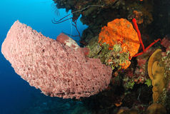 Coral and barrel sponge. Stock Images