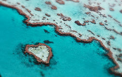 Coral Barrier grande Foto de Stock Royalty Free