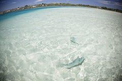 Coral Bay Stock Image