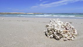Coral Bay, Austrália Ocidental Fotografia de Stock Royalty Free