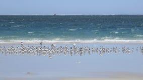 Coral Bay västra Australien Royaltyfri Bild