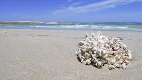 Coral Bay, Westelijk Australië Royalty-vrije Stock Fotografie