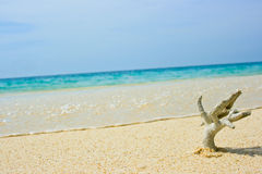 Coral on the beach. At krabie in thailand Royalty Free Stock Photography
