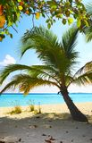 Coral beach. On the island Kuredu in the Indian Ocean, Maldives Royalty Free Stock Images