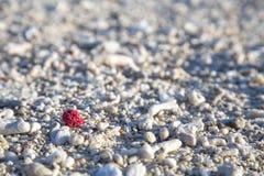 Coral Beach em Austrália Imagens de Stock