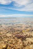 Coral Beach in Guam  Ritidian Point Royalty Free Stock Photos