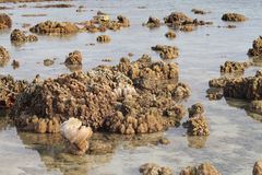 Coral on the beach at the island Thailand. Royalty Free Stock Photography