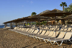 Coral beach near Eilat Royalty Free Stock Image