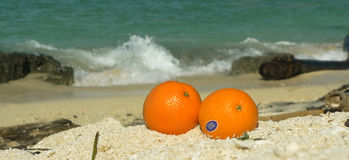 Coral Beach Oranges Sulu Sea SE Asia (panoramic) Royalty Free Stock Images