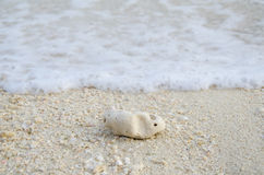 Coral and beach. Coral on the beach and wave Royalty Free Stock Photos