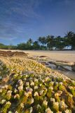 Coral at the beach with white sand and coconut tree royalty free stock image