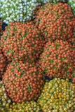 Coral Bead Plant ( Nertera granadensis) close-up imagens de stock royalty free
