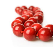 Coral beads close-up. Coral beads isolated on white Royalty Free Stock Images