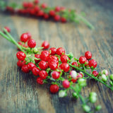 Coral berry Royalty Free Stock Photo
