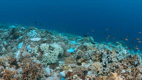 Coral bleaching. Occurs when sea surface temperatures rise Stock Photo