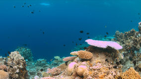 Coral bleaching. Occurs when sea surface temperatures rise Stock Images