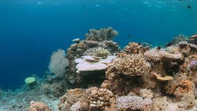 Coral bleaching. Occurs when sea surface temperatures rise Stock Image