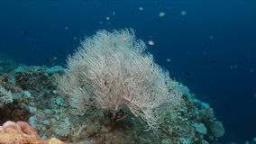 Coral bleaching. Occurs when sea surface temperatures rise Stock Photos