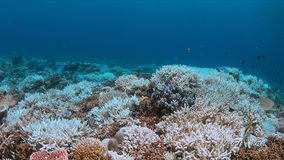 Coral bleaching. Occurs when sea surface temperatures rise Stock Photography