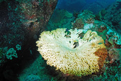 Coral bleaching in Thailand Stock Photos