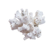 Coral bleaching on white background Stock Images