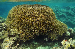 Coral block Royalty Free Stock Photos