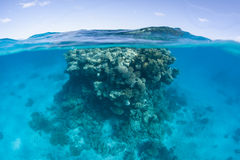 Coral Bommie in Polynesian Lagoon Stock Images