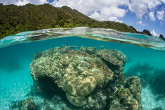 Coral Bommie and Tropical Islands. A diverse and healthy coral reef grows near a set of remote tropical islands in Raja Ampat, Indonesia. This beautiful region Stock Image